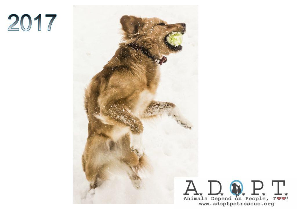 adopt-2017